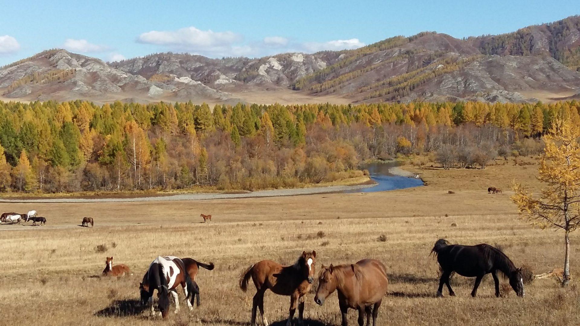 Potovaje na Altaj